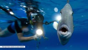 Villasimius eBook di Luca Tamagnini - Un pesce balestra durante le riprese per l'eBook fotografico con video.