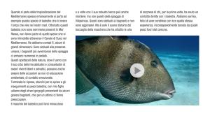 Villasimius eBook di Luca Tamagnini - Pesce Balestra