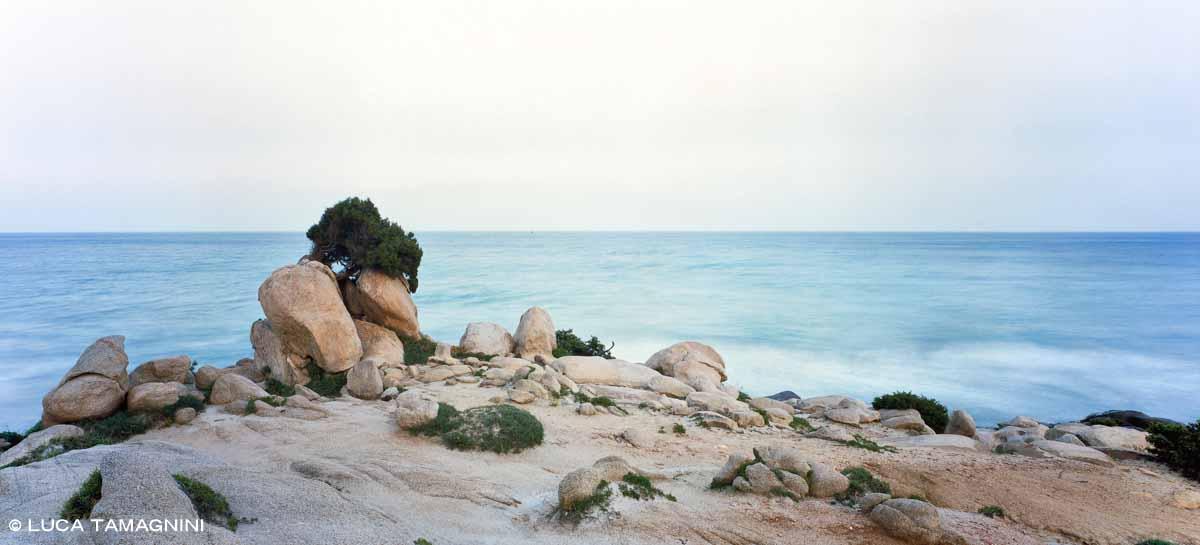 Sardegna, Villasimius, Spiaggia Timi Ama, Porto Giunco, ginepro in riva al mare - Fotografia Fine Art di Luca Tamagnini - Formato 150 x 70 cm (immagine 123 x 93) - Catalogo 2006-003 - Vendita foto