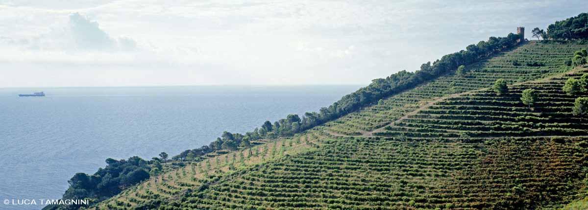 Arcipelago Toscano, Isola di Gorgona - Fotografia Fine Art di Luca Tamagnini - Formato 110 x 43 cm - Catalogo 2002 -006