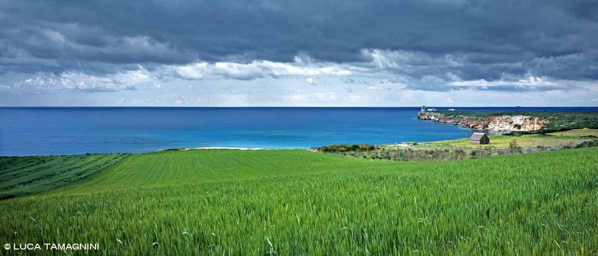 Sardegna, Penisola del Sinis, Barracas nei pressi di Torre Seu - Fotografia Fine Art di Luca Tamagnini - Formato 136 x 66 cm - Catalogo 2004-002